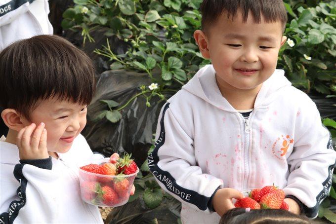"""D:东方剑桥7-9-1—2018-8-31微信+活动8春季活动汇总已用天马相城幼儿园""""莓味有约""""草莓采摘草莓采摘&0551235356810053.jpg"""
