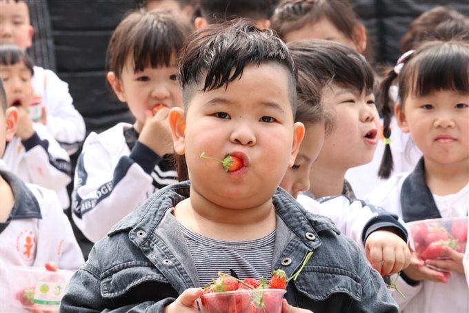 """D:东方剑桥7-9-1—2018-8-31微信+活动8春季活动汇总已用天马相城幼儿园""""莓味有约""""草莓采摘草莓采摘9601928007046000.jpg"""